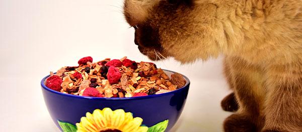 Curso Nutrición y Dietética Animal
