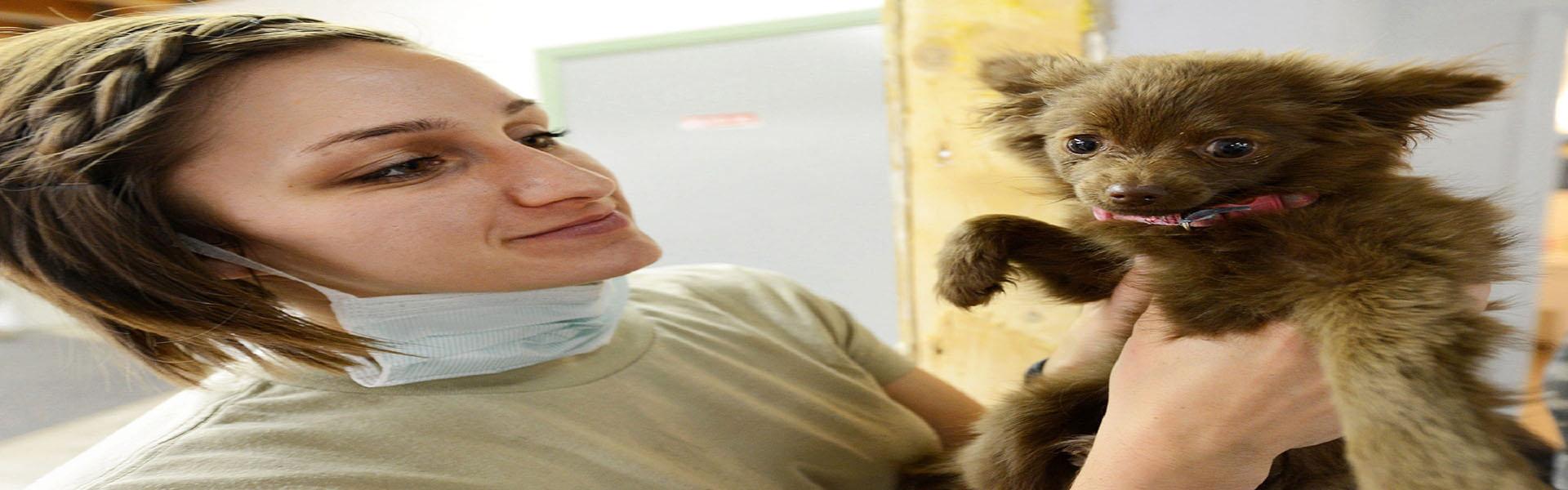 Curso auxiliar clínico veterinario